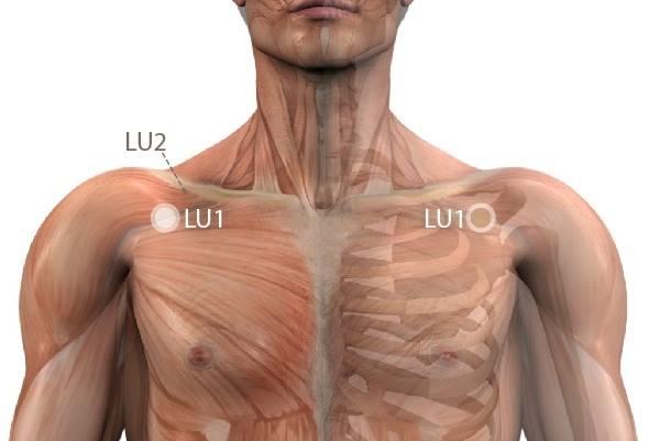 váll fájdalom, ha köhög hársvirág ízületi kezelésre