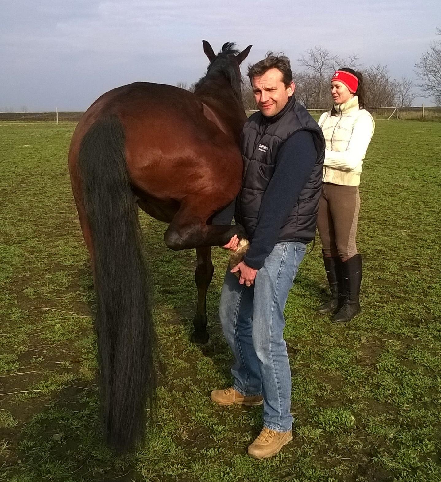 lovak ízületi fájdalmainak kezelésére