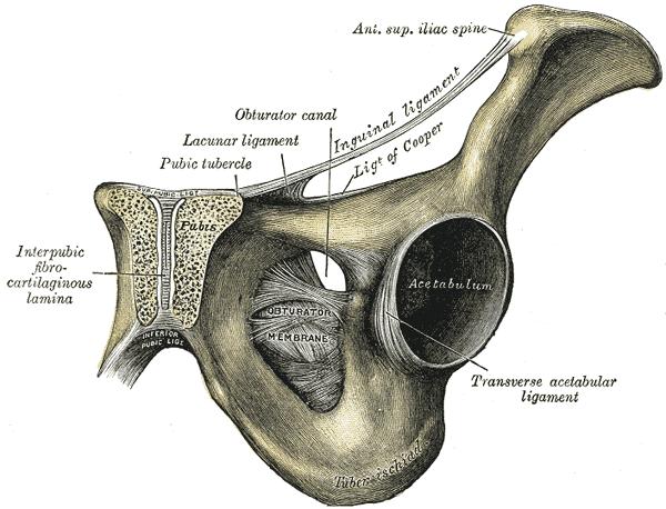 az acetabulum csípőízülete fáj törés syndesmosis boka kezelés