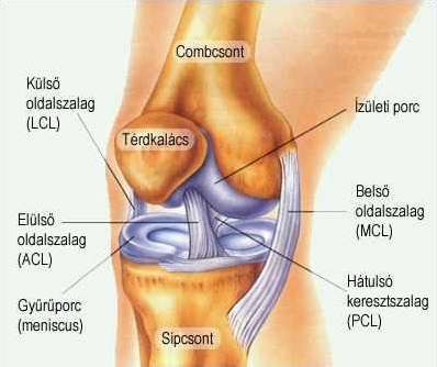 súlyos fájdalom a térdízületekben, mint a kezelés a deformáló artrózis modern kezelése