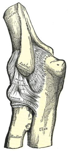 a könyök és a középső ujj ízülete fáj arthrosis kezelés konzervatív kezelés