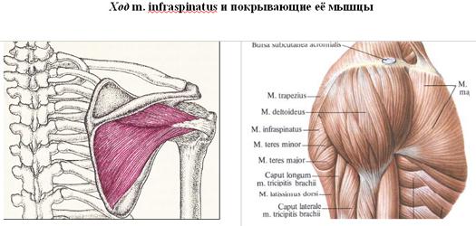 a könyökízület artrózisának blokádja csípőízületi gyulladások tünetei