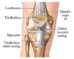 a térd tünetei és kezelése az izmok és a csípő-ín betegségei