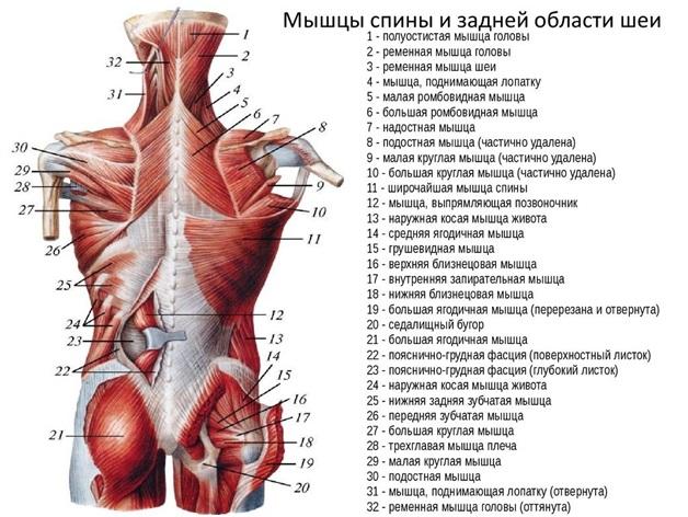 csípőízületek fájnak, ha fut fáj a váll és az ujjak ízületei