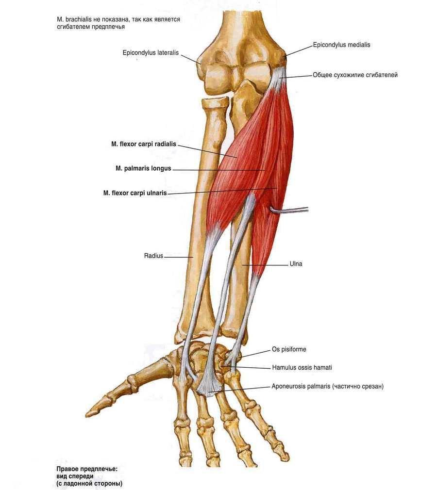 a nagy lábujj ízületének deformáló artrózisa