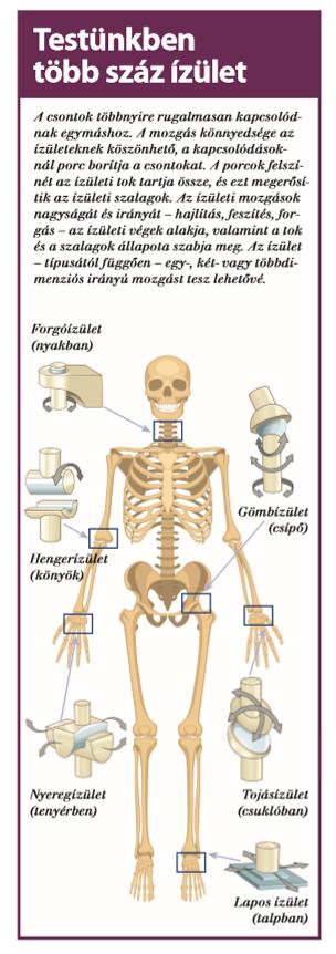 a térdízület inak és ínszalagok károsodása ízületi fájdalom infúzió