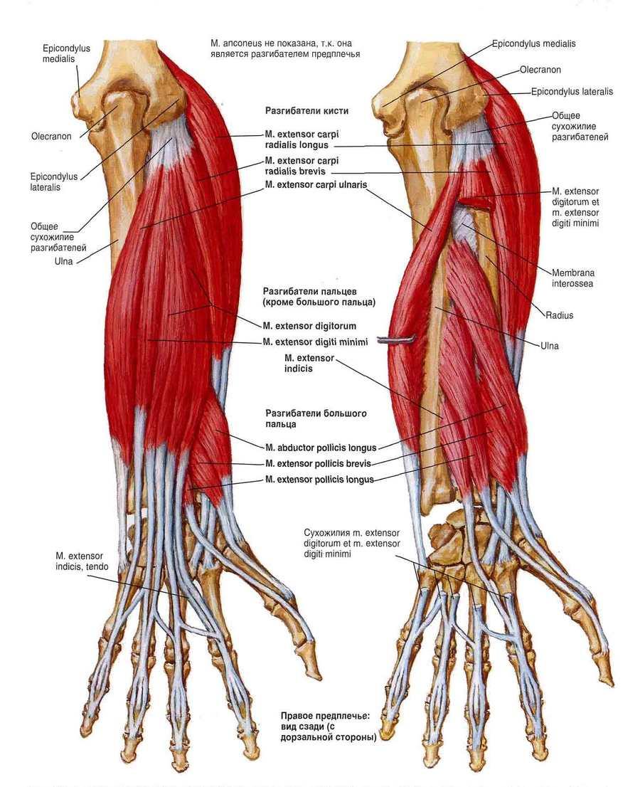 könyök fájdalom kar birkózás középső ízületi fájdalom