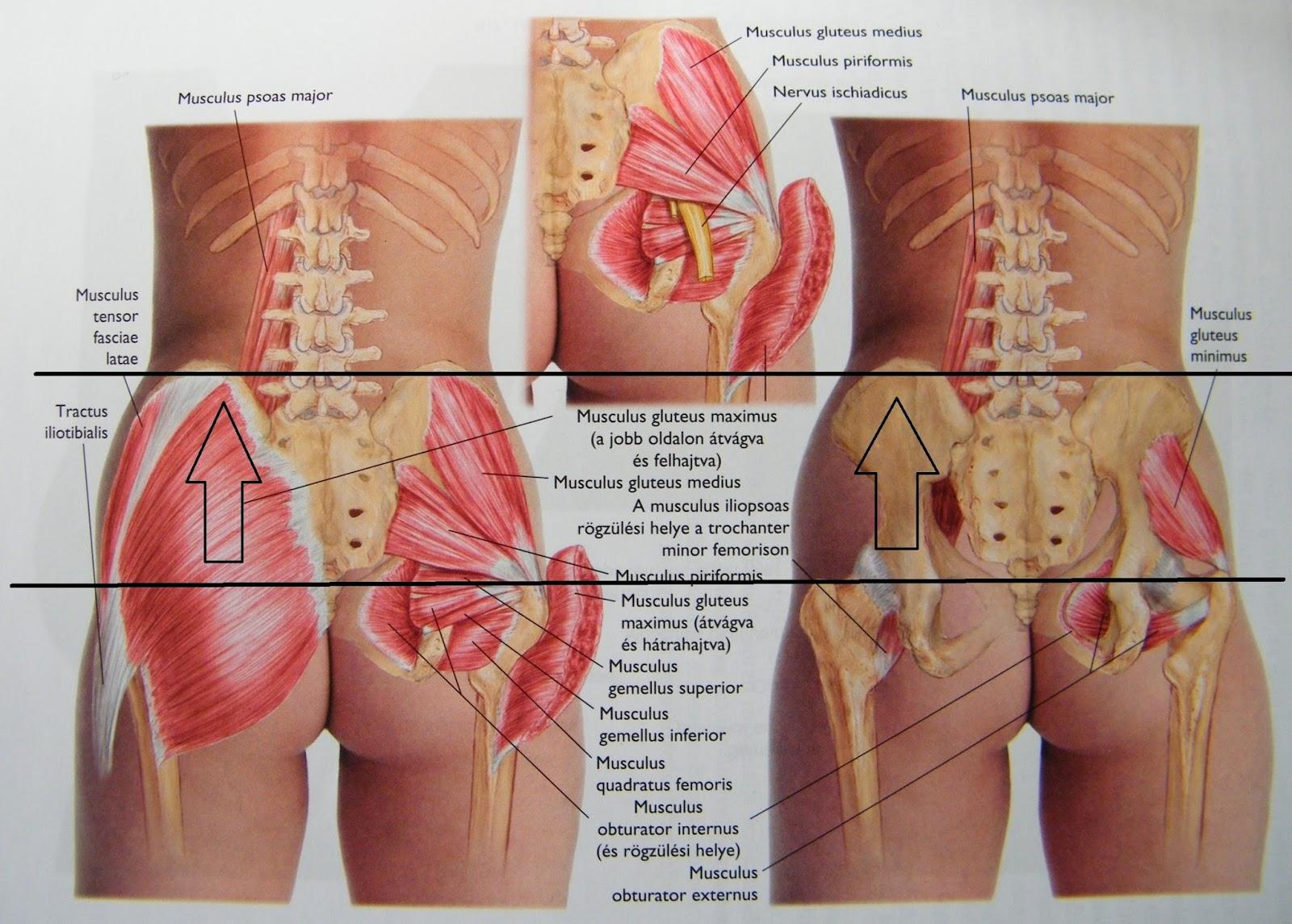 csípőizom-fájdalom kezelve hogyan kell bevenni a glükozamin-kondroitin komplexet