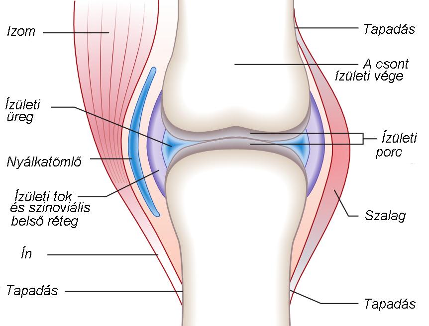 a térd szalagjai sérüléseinek osztályozása