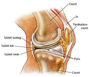 térdízületi betegségek és kezelése ízületek és lágy szövetek fájnak