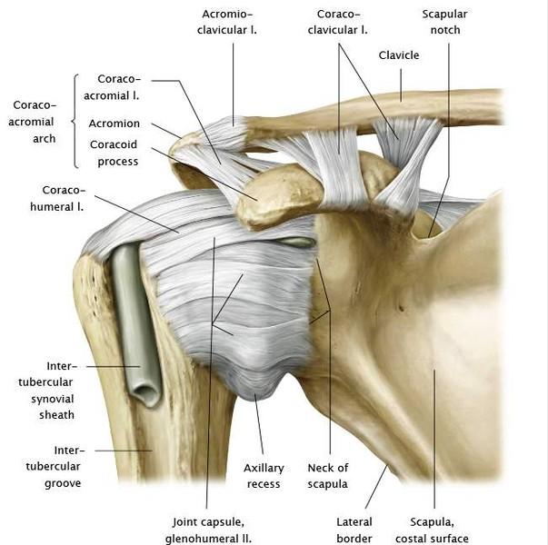 áttekintés az artrózis kezeléséről a cseh köztársaságban térd sérülés visszaesése