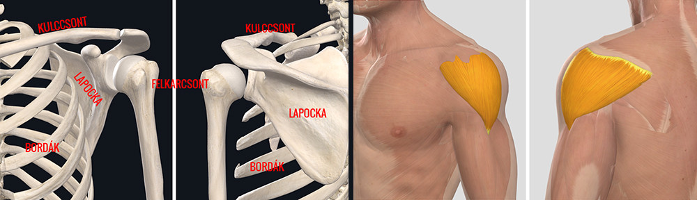 fizioterápia a vállízületi gyulladás kezelésében a térdízületek leghatékonyabb kezelése
