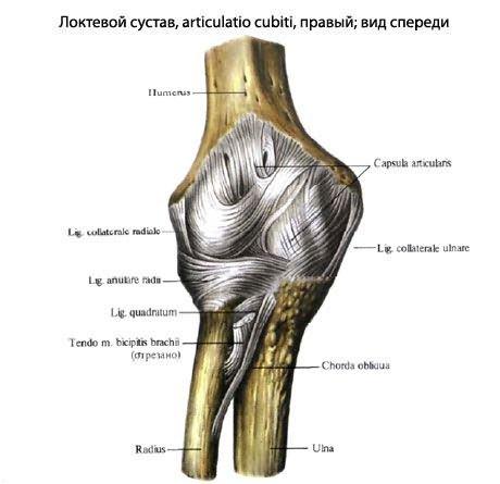 fájdalom a könyökízületben sportolóknál vállízület fájdalom melyik orvos