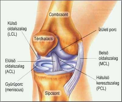 minden ízület ízületi elváltozása kerékpározás csípőízület artrózisával