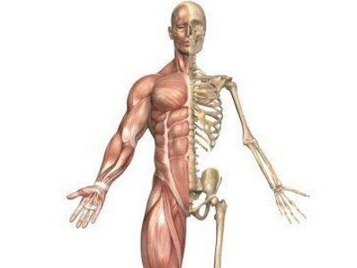 a test csontok és ízületek fájnak