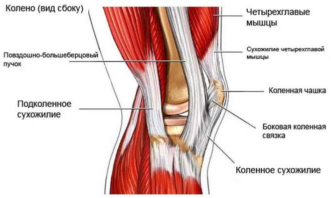 a térd immobilizálása sérülés után a gerinc lumbosacrális kenőcsének kezelése