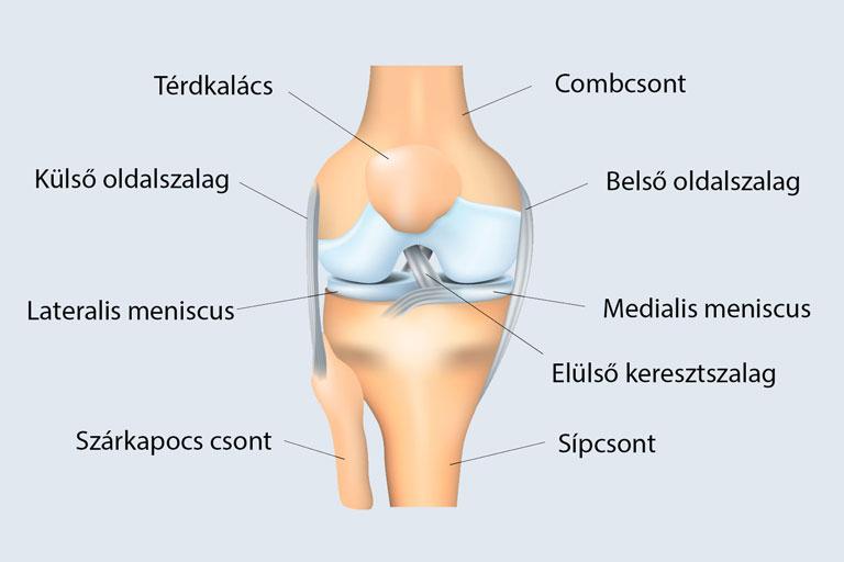 a térdízület belső meniszkuszának áttekintése hogyan lehet kezelni a fájó karízületet