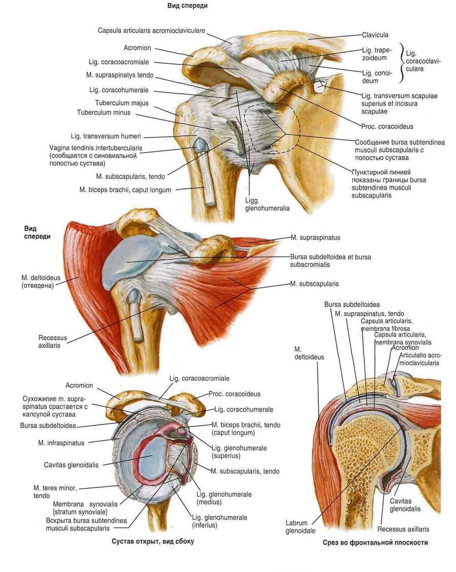 fájdalom ín csípőízület