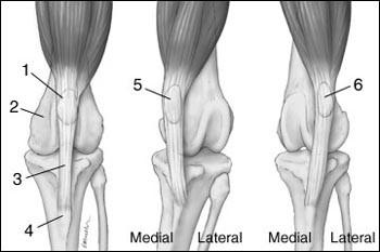 a térd gyógyszeres szinovitisz mi a második fokú csípőízület artrózisa