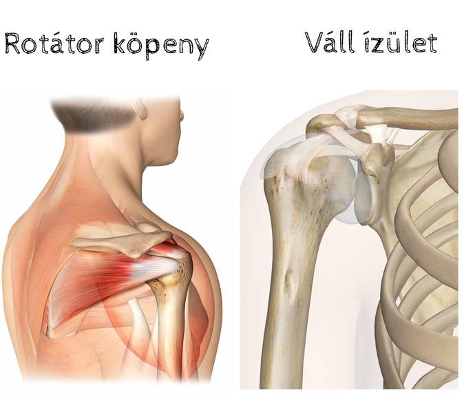 milyen gyógyszereket alkalmaznak a nyaki gerinc csontritkulásában