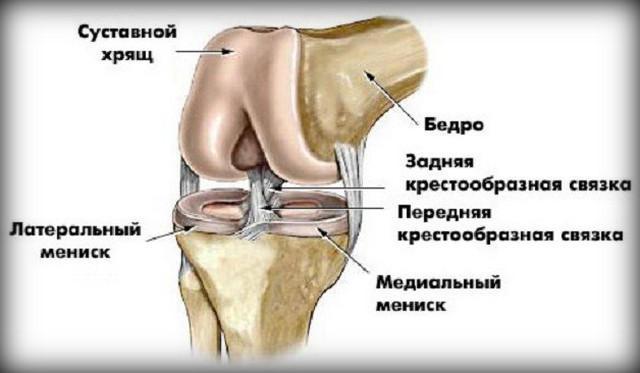 segít-e a séta a térd artrózisában