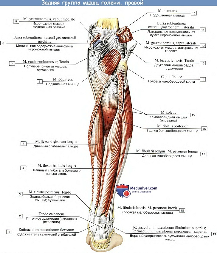 az acetabulum csípőízülete fáj
