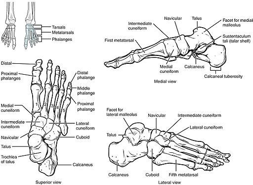 fájdalom a lábak és a csontok ízületeiben