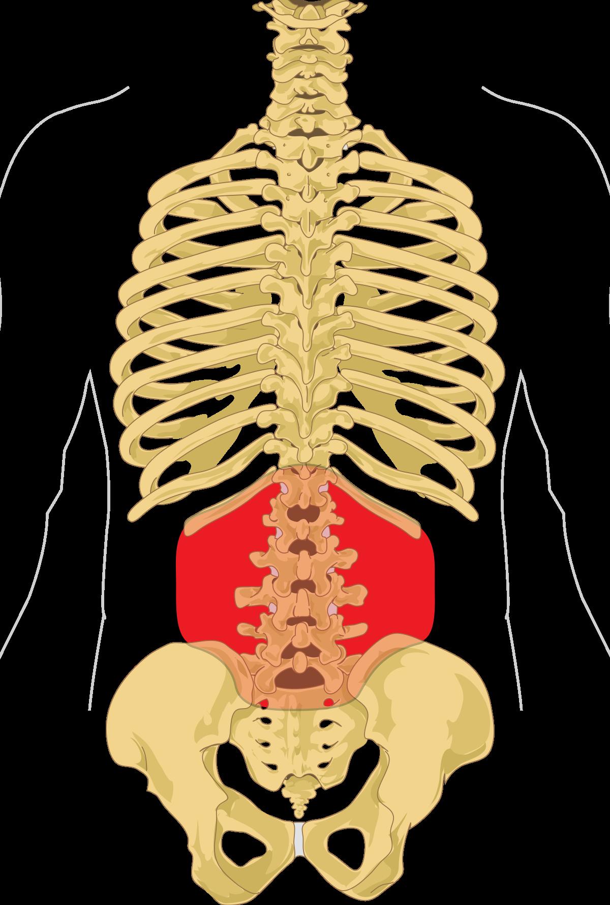 készítmények a gerincvelő csontritkulásához