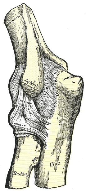 milyen gyógyszerek támogatják az ízületeket hogyan lehet kezelni a boka ligamentum könnyét