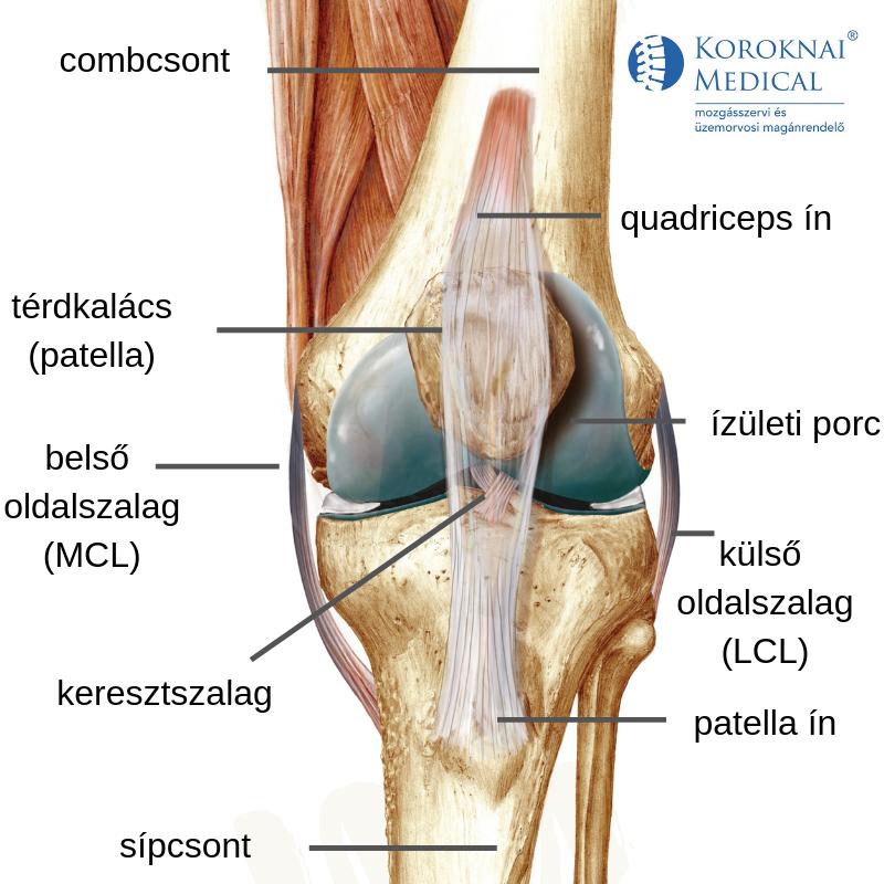 térd ízületi fájdalmak fájdalom a lábban csípőpótlás után