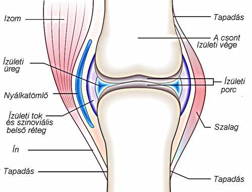 térdízületi tünetek és ízületi gyulladás kezelése