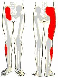 hogyan lehet azonosítani a csípőízületi gyulladást)