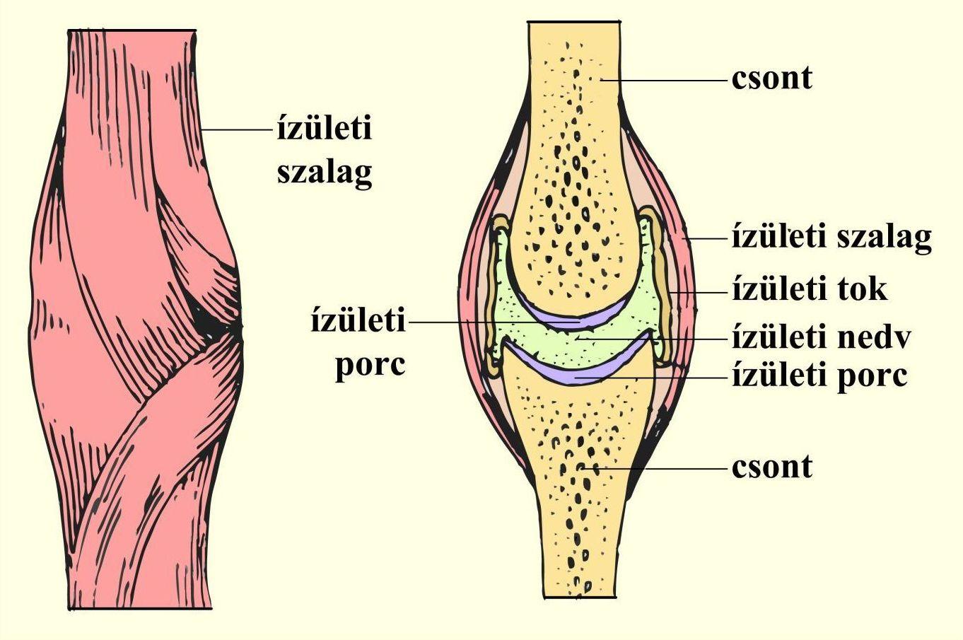 a csípő jobb artrózisa nephropathia szisztémás kötőszöveti betegségekben