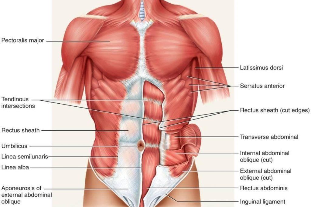 hátfájás amely a csípőízületre terjed ki