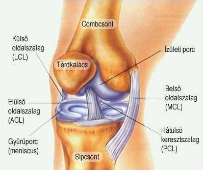 lehet-e gyógyítani a vállízület artrózisát