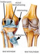 a térd artrózisának kezelésére vonatkozó előírások futó térd sérülés